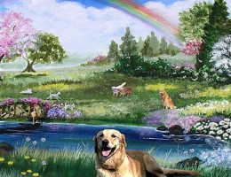 doggie_heaven-767087